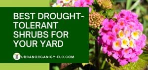 11 Best Drought-Tolerant Shrubs For Your Yard