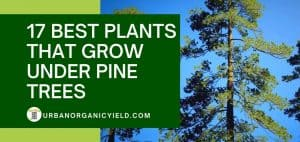 17 Best Plants That Grow Well Under Pine Trees