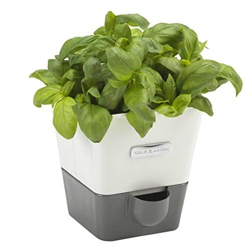COLE & MASON Self-Watering Herb Garden System