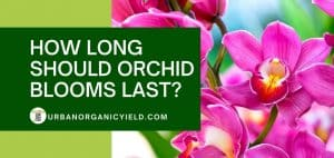 How Long Should Orchid Blooms Last
