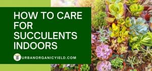 How To Care For Succulents Indoor_ A Beginner's Guide