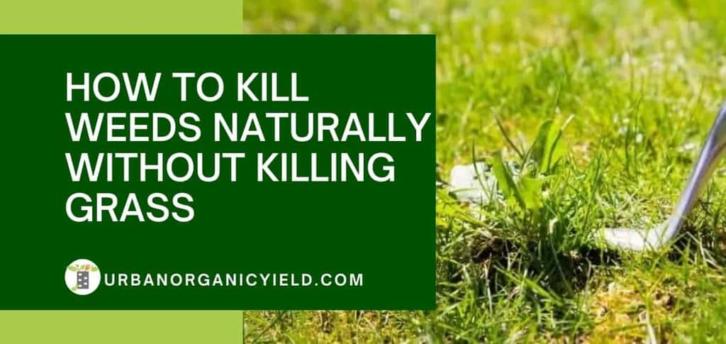 How To Get Rid Of Weeds Naturally Without Killing Grass