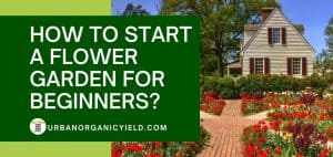 how to start a flower garden for beginners