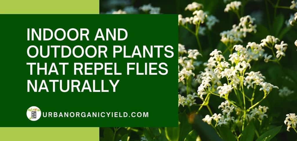 14 Amazing Indoor & Outdoor Plants That Actually Repel Flies Naturally