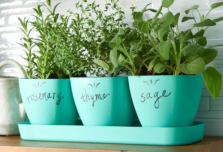 Herbs For Kitchen
