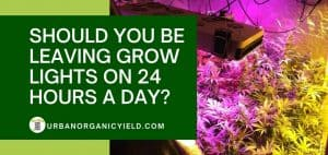 Should You Leave Grow Lights On 24 Hours A Day