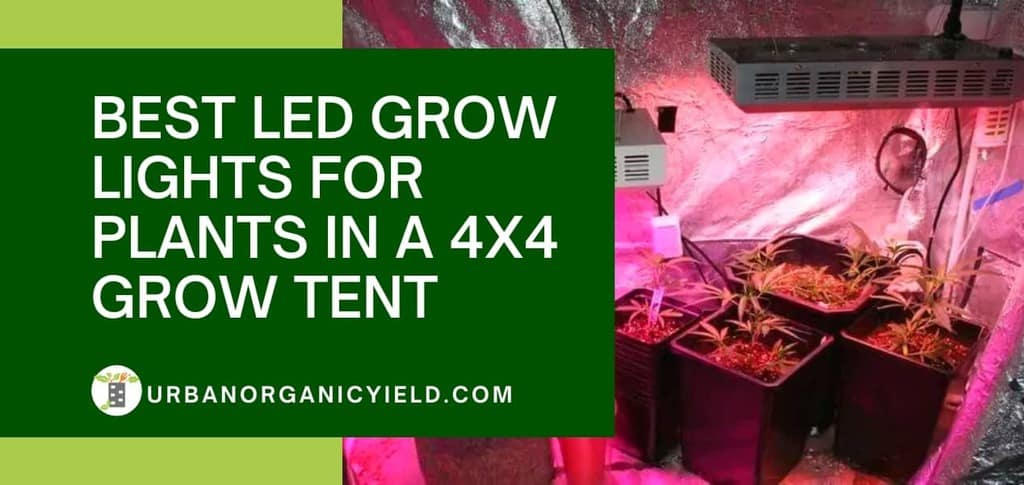 Best Led Light For 4x4 Grow Tent_ Get Correct LED Wattage For 4x4 Tent