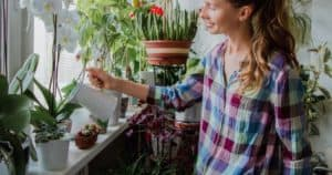 Watering Houseplants_ How Often Should You Water Indoor Plants