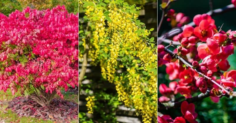 11 Best Drought-Tolerant Shrubs For Your Yard (1)