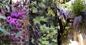 17 Gorgeous Flowering Vines That Thrive In Shady Areas