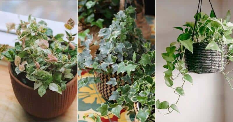 18 Best Indoor Vining Plants For Giving Your Home A Jungle Vibe
