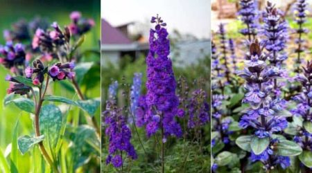 30 Attractive Purple Perennials (With Picture) For Your Garden
