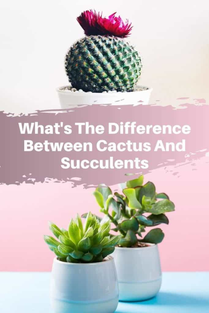 What's The Difference Between Succulents And Cacti_