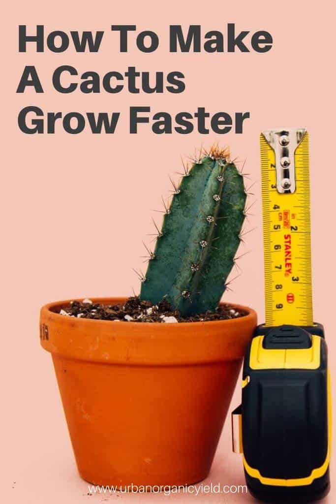 How To Make A Cactus Grow Faster