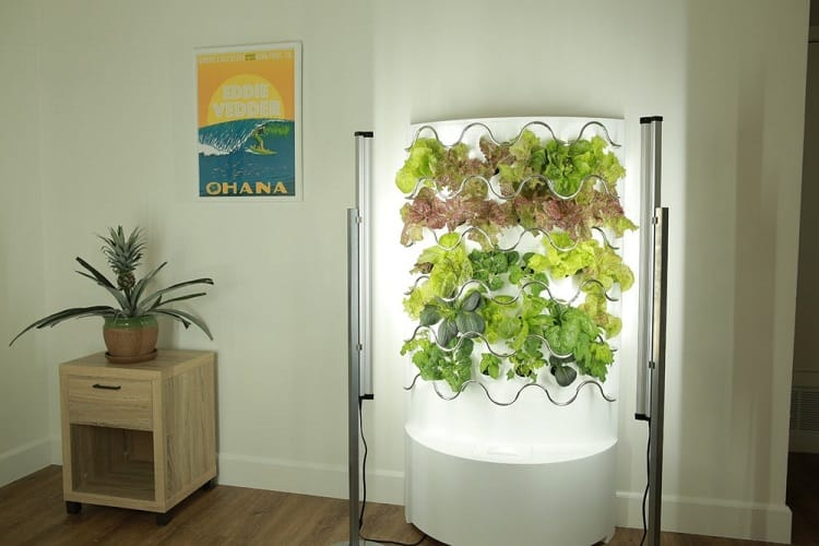 Types Of Hydroponic Systems For Growing Herbs Indoor