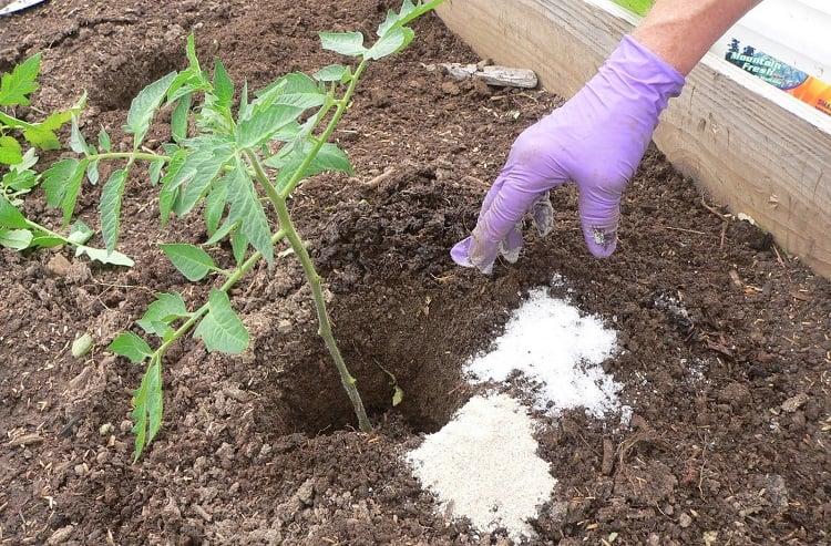 Using Epsom Salt As Fertilizer