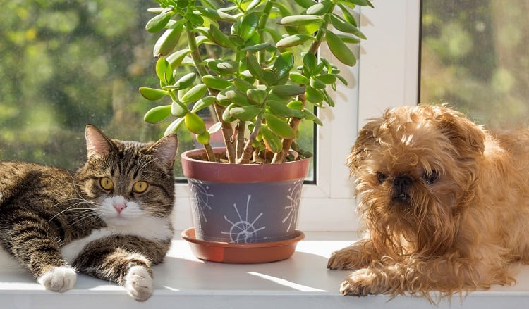 Cat and Dog Near ZZ Plant