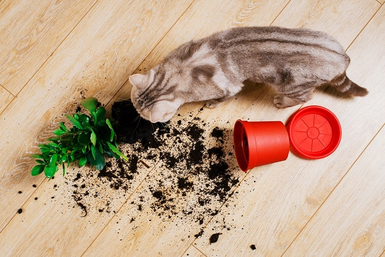 Cat Snuffing Around Poison Plant