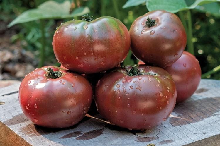 Purple Cheeroke Tomato