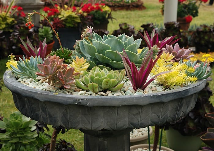 concrete pot with succulents