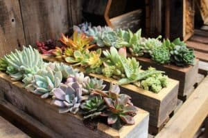 How To Pick The Best Pot For Your Next Succulent