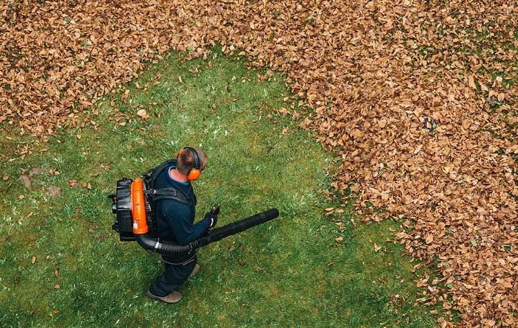 Taking Care Of Leaves