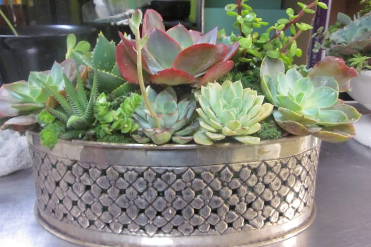 How Much Space Should Be In Your Succulents' Container?