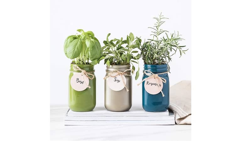 Thoughtfully Gifts Mason Jar Garden