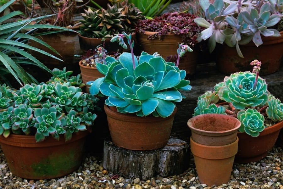 6 Tips For Succulent Fertilization