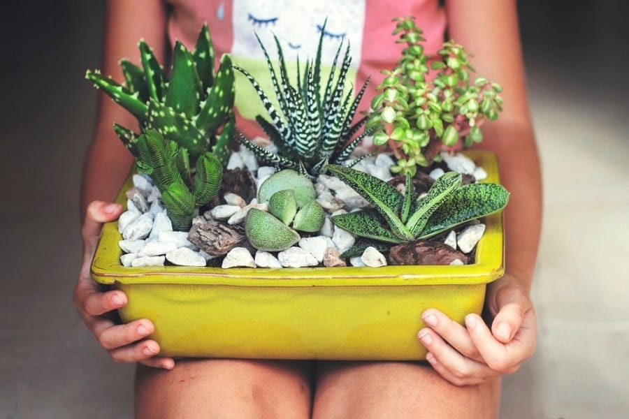Ultimate Guide To Repotting A Succulent
