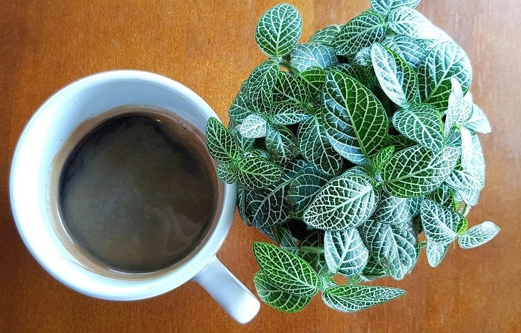 coffee grounds for succulents