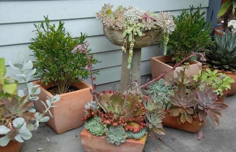 Succulents In Garden