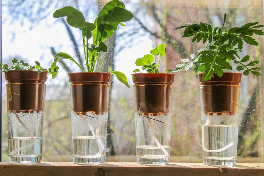 Build Your Own Indoor Watering System