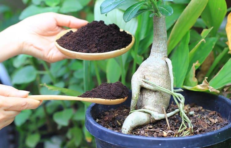 guide to houseplants fertilization