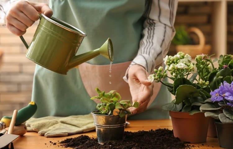 liquid fertilizer in water