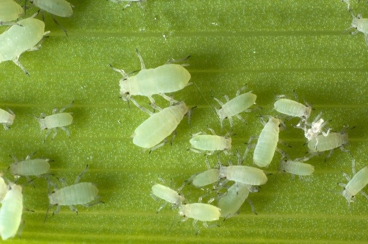 How To Prevent White Mites From Entering Your Garden?