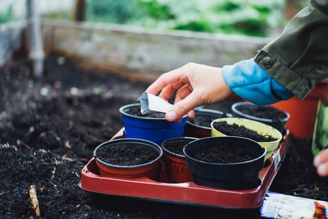 planting snake plant seeds