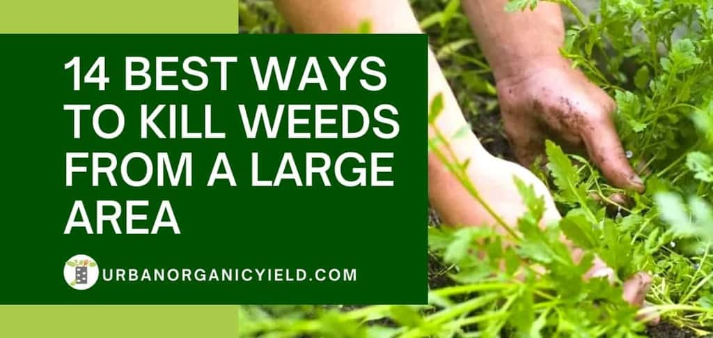 What Kills Weeds Permanently: 14 Best Ways to Kill Weeds From a Large Area | UrbanOrganicYield.com
