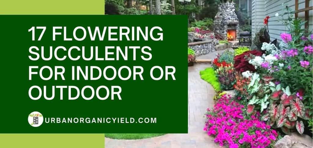 17 Flowering Succulents For Indoor Or Outdoor | UrbanOrganicYield.com