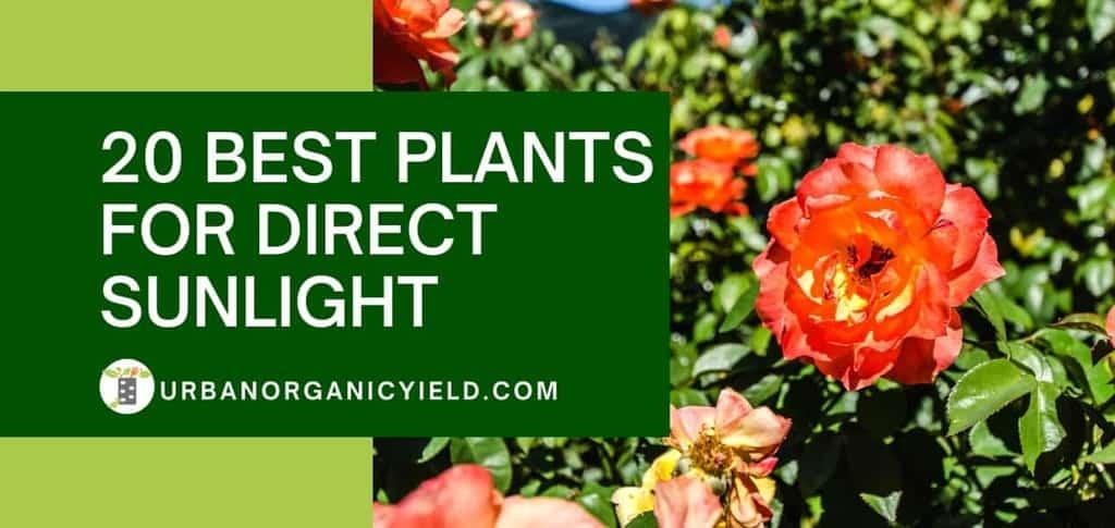 best plants for direct sunlight