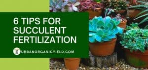 tips for succulent fertilization