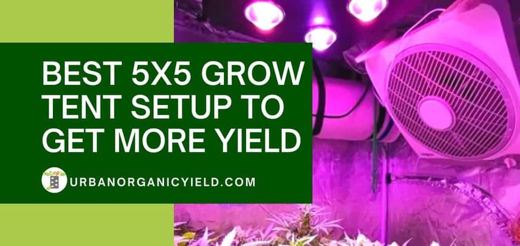 Best 5X5 Grow Tent Setup To Get More Yield