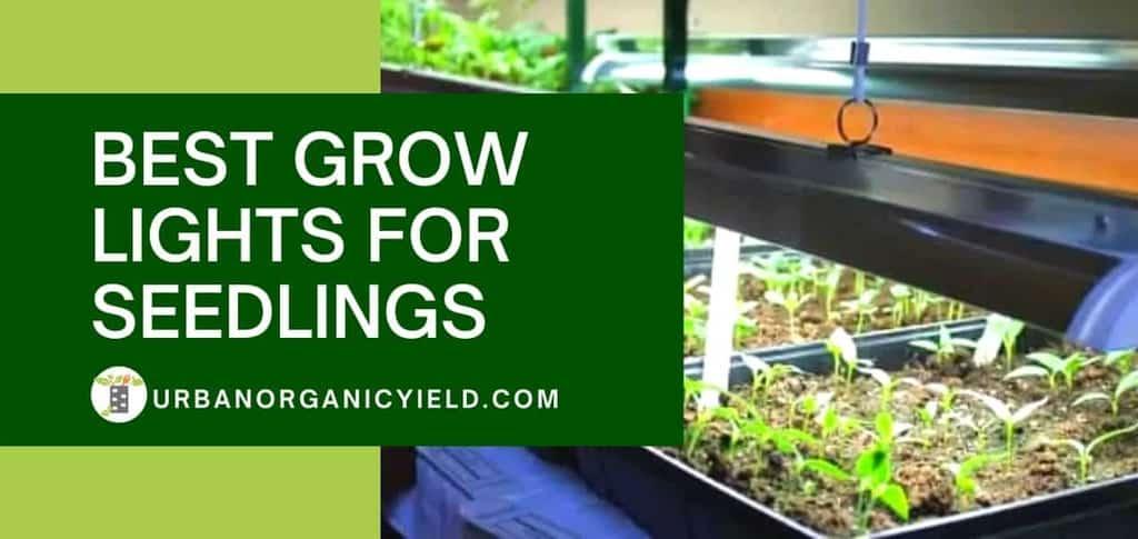 Best Grow Lights For Seedlings To Ensure Successful Germination | UrbanOrganicYield.com