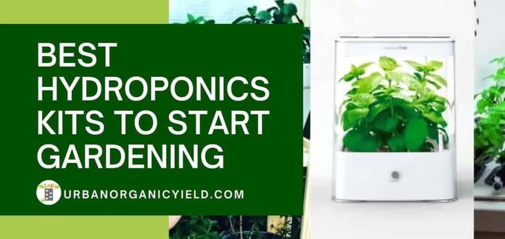 Best Hydroponics Kits To Start Gardening