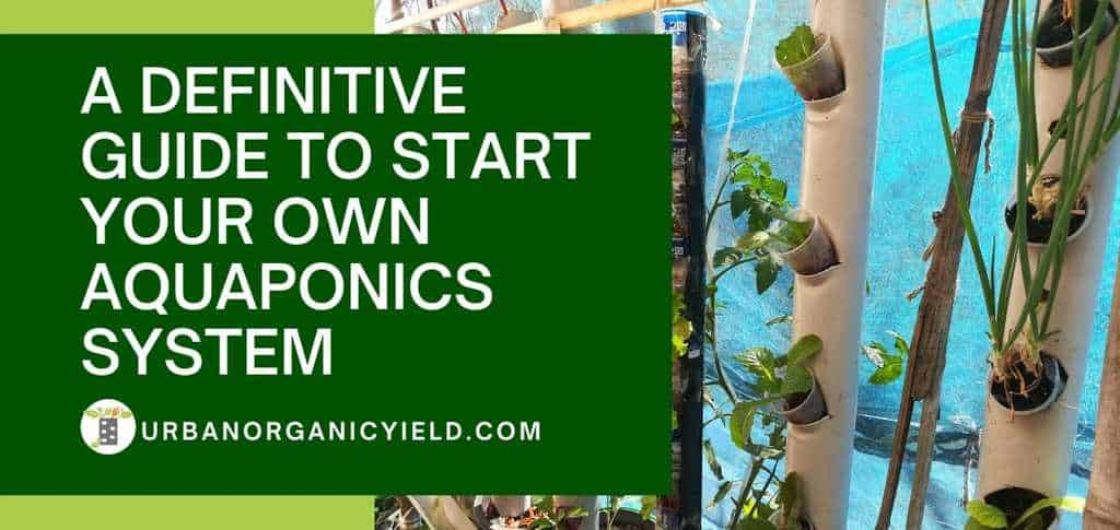 Definitive Guide To Start Your Own Aquaponics System