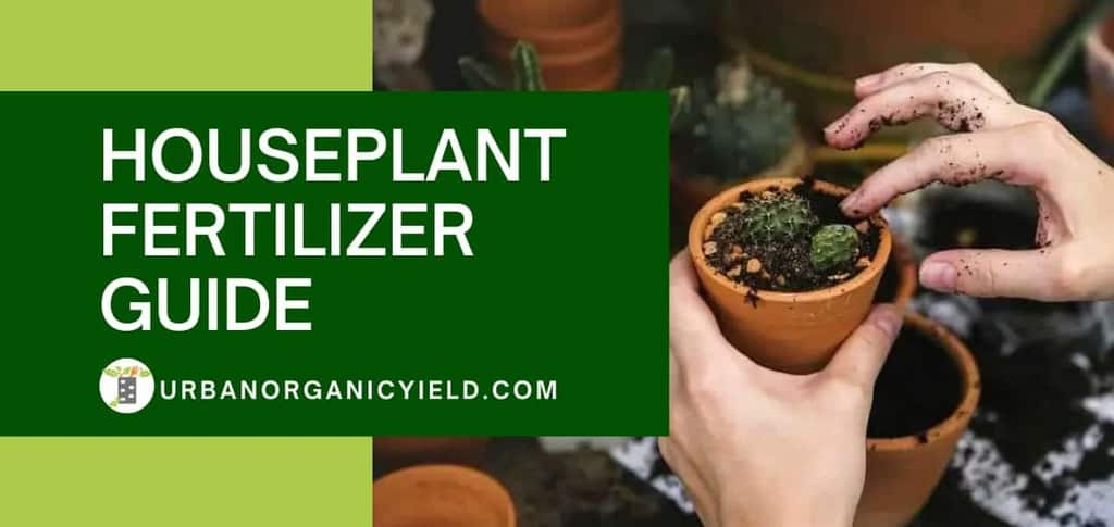 the ultimate guide of houseplant fertilizer