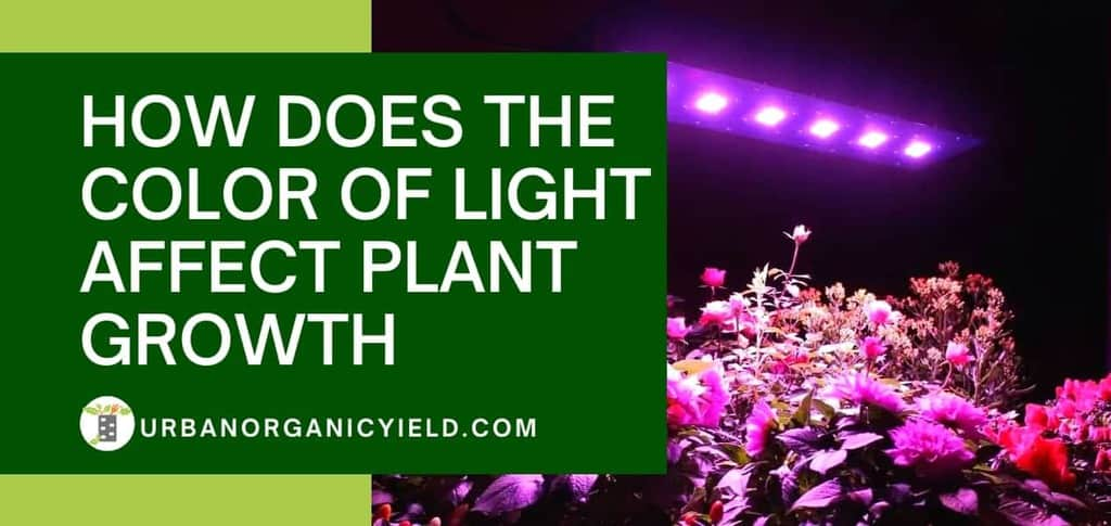 How Does The Color Of Light Affect Plant Growth