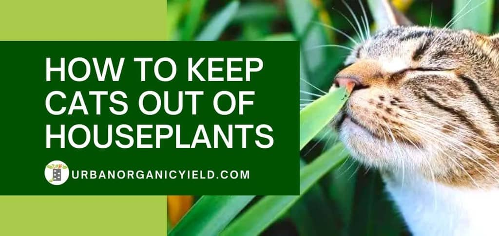 How To Keep Cats Out Of Houseplants