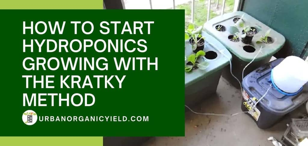 How To Start Hydroponics Growing