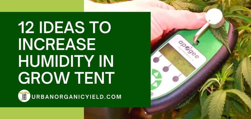 12 Ideas on How To Increase Humidity In Grow Tent | UrbanOrganicYield.com